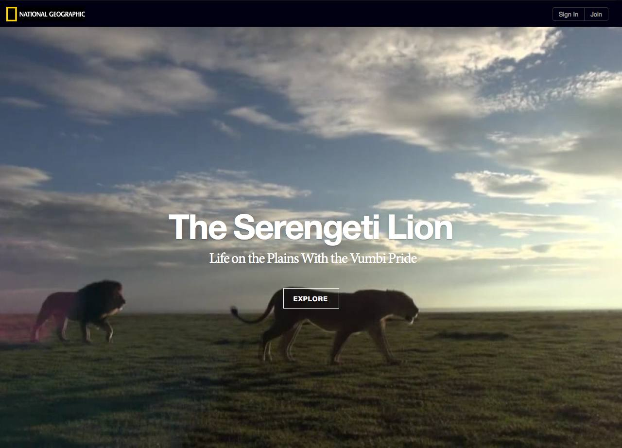 The Serengeti Lion  National Geographic Magazine